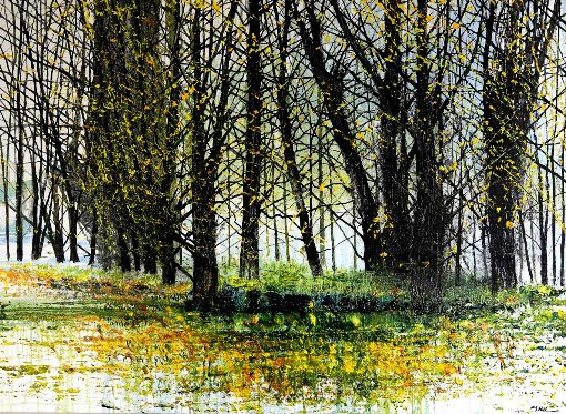 Spring Forest Floor