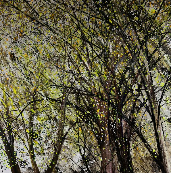 Summer Woodland Light