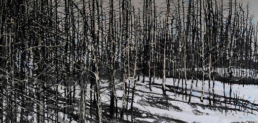 Winter - Silver Birch